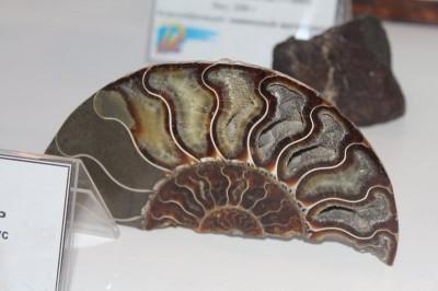 Или вполне земного происхождения, но очень давнего - как этот аммонит из мезозоя